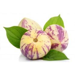 Pepino Fruta Kilo