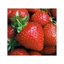 Frutilla 500 grs